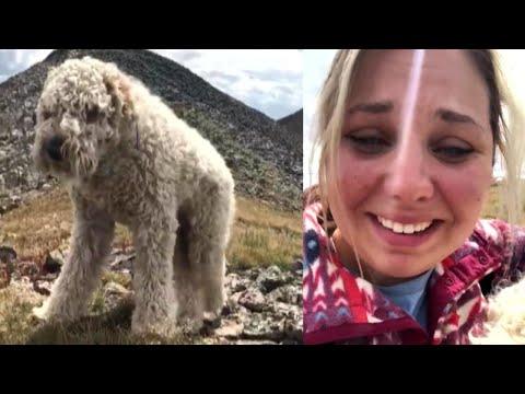 Kat Jackson - Dog Found in Mountains 3 Weeks After Crash