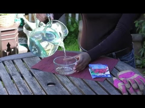 How to Soak Seeds Before Planting : Seed Planting Tips