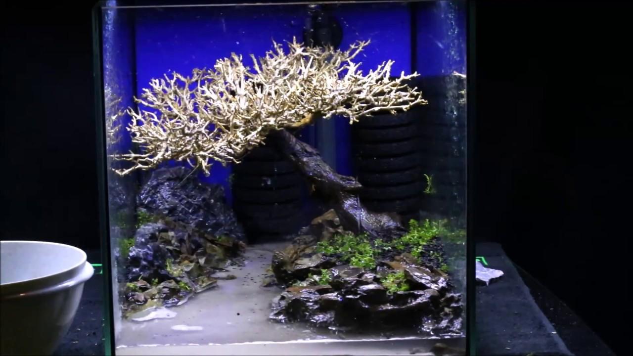 How to: Aquascaping Bonsai Tree * Timelaps * - YouTube