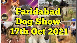 Dog Show In Faridabad Oct 2021 | Dog Competition | Dog Market | Dog Sale Delhi NCR Dog Market 2021
