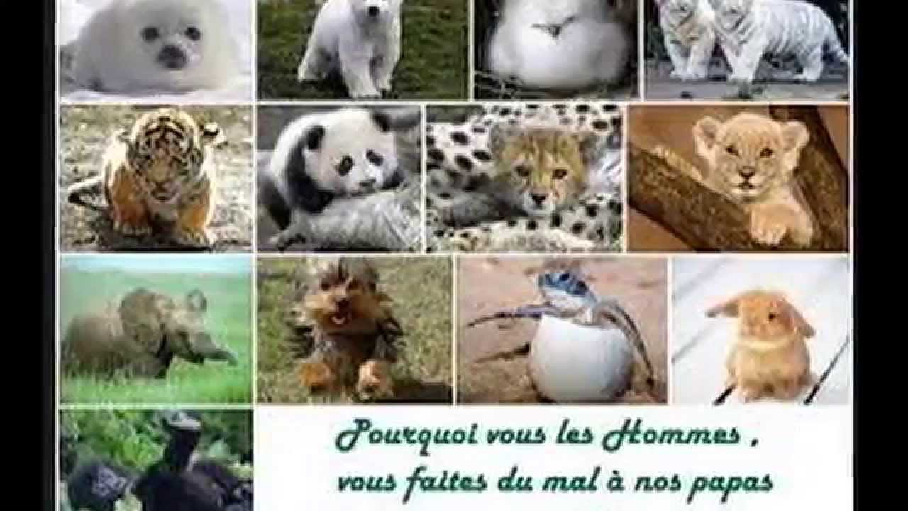 Fabuleux les animaux en voie de disparition - YouTube HP96