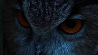 THE EAGLE OWL : THE LORD OF THE NIGHT