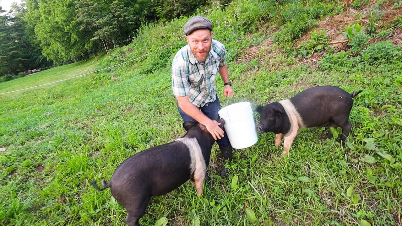 And then I let the Pigs Out (on purpose) - YouTube