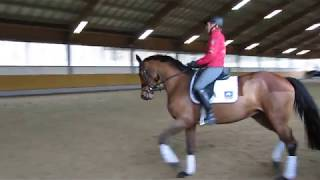 Ingrid Klimke mit Asha P, offenes Training 25.01.18, Video 9