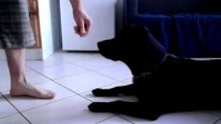 Dog Crawling...usmc :)