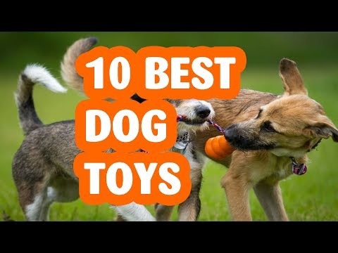 10-best-dog-toys.the-best-dog-toy-2019