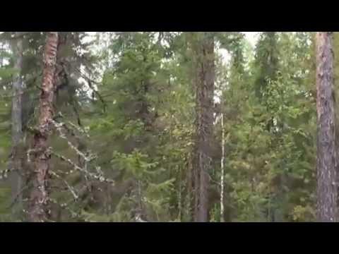 видео: Охота с Карелкой