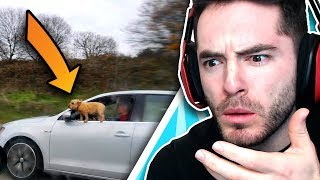 Someone Please Save This Dog (Idiots In...