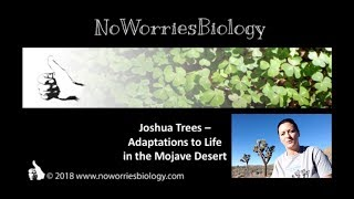 Joshua Trees - Adaptations to Life in the Mojave Desert