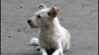 Сельчане нашли собаку, пропавшую после ДТП.MestoproTV