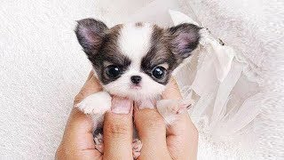 Cute Cats And Dogs Compilation That  Will Be Touched You