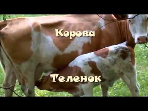 Животные и их детеныши. Презентация на тему животные,