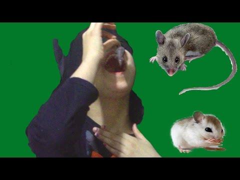 Batgirl eating mouse