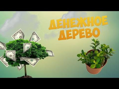 Денежное дерево или как притянуть богатство!🌳💰
