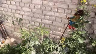 My Roof Top Urban Kitchen Garden in Rawalpindi Pakistan HD