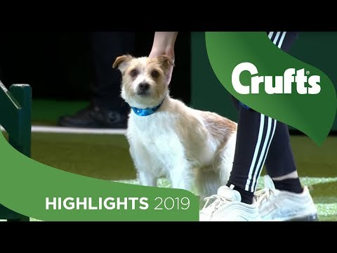 Crowd Favourite Olly The Rescue Dog Returns To The Crufts Stage | Crufts 2019
