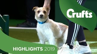Crowd Favourite Olly The Rescue Dog Returns To The Crufts Stage | Crufts 2019 thumbnail