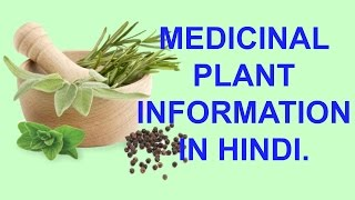 MEDICINAL PLANT INFORMATION IN (HINDI) WITH USEFUL COMMENTARY.