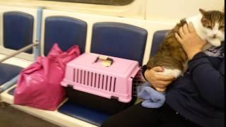 Кот Сема едет в метро