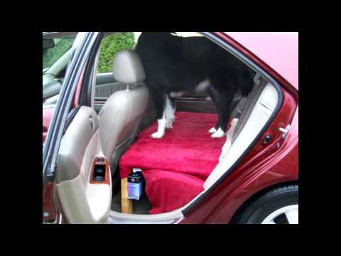 Dog platform for your car