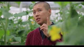 видео: Тилек Токтогазиев - о тепличном бизнесе
