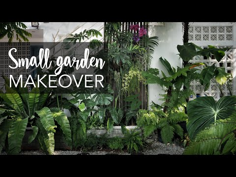Small tropical garden (20sqft) makeover with 10 Pro Gardening Tips