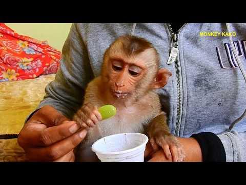 monkey-baby-kako-eating-ice-cream-|-monkey-eat-ice-cream-|-baby-monkey-eat-ice-cream