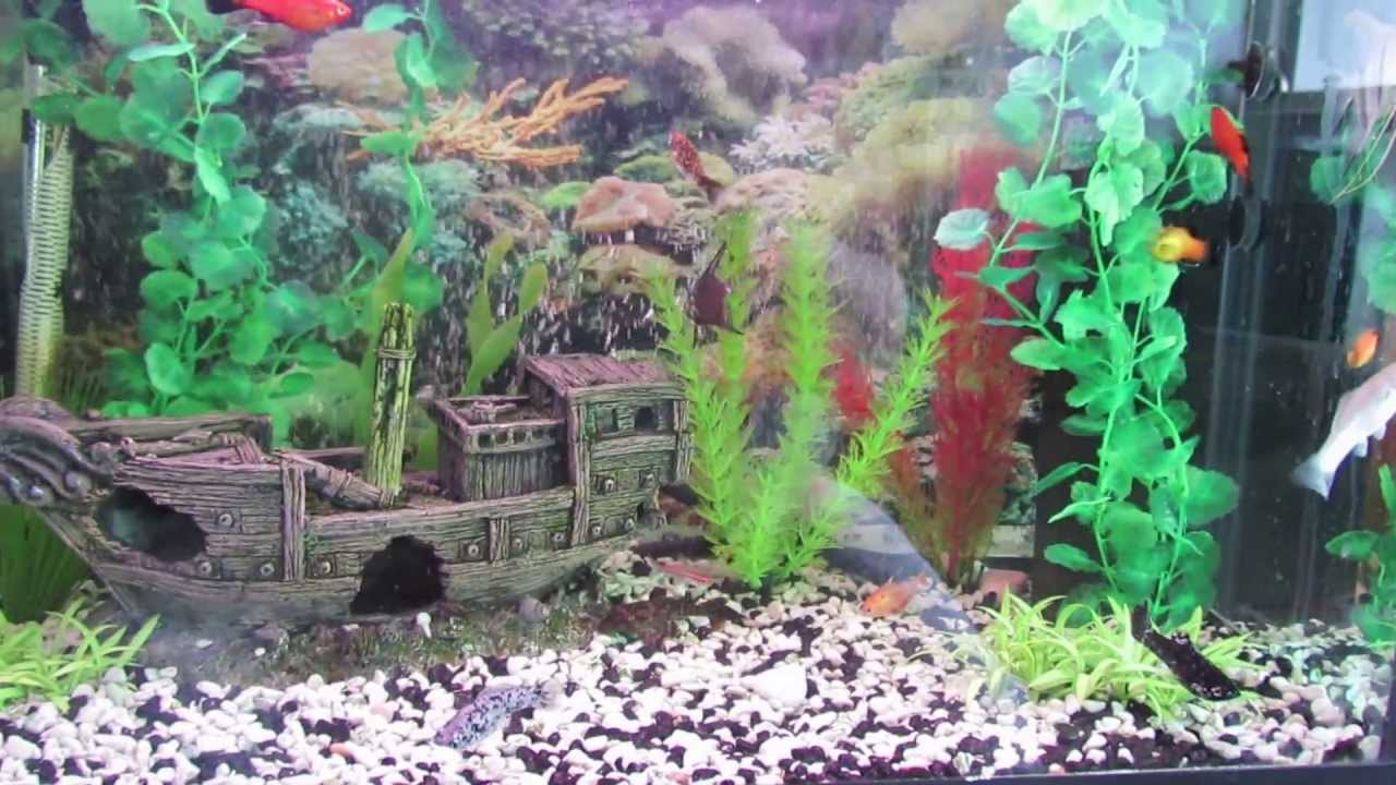 Freshwater aquarium fish tank pictures -  My First Tropical Fresh Water Fish Tank Review Vo 1 Youtube