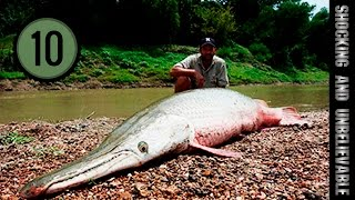ТОП 10 - САМЫХ БОЛЬШИХ ПРЕСНОВОДНЫХ РЫБ(Топ 10 самых больших пресноводных рыб,обитающих по всему миру. Любой рыбак мечтает о богатом улове. Однако..., 2014-07-18T15:21:48.000Z)