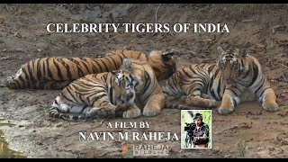 WILDERNESS DAYS : Celebrity Tigers Of India