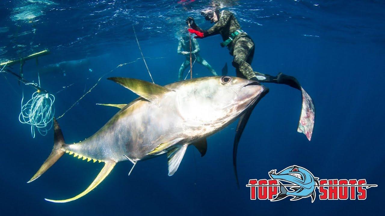 spearfishing 100kg yellowfin tuna youtube