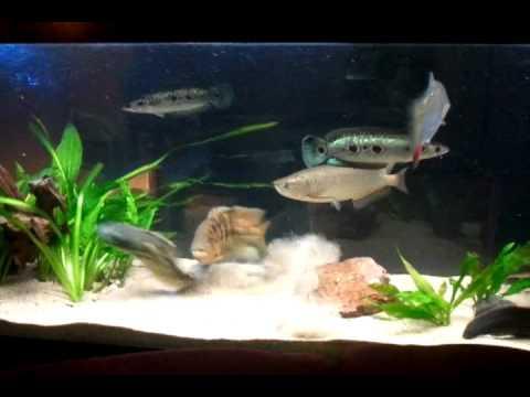 fish tank 500l doovi. Black Bedroom Furniture Sets. Home Design Ideas