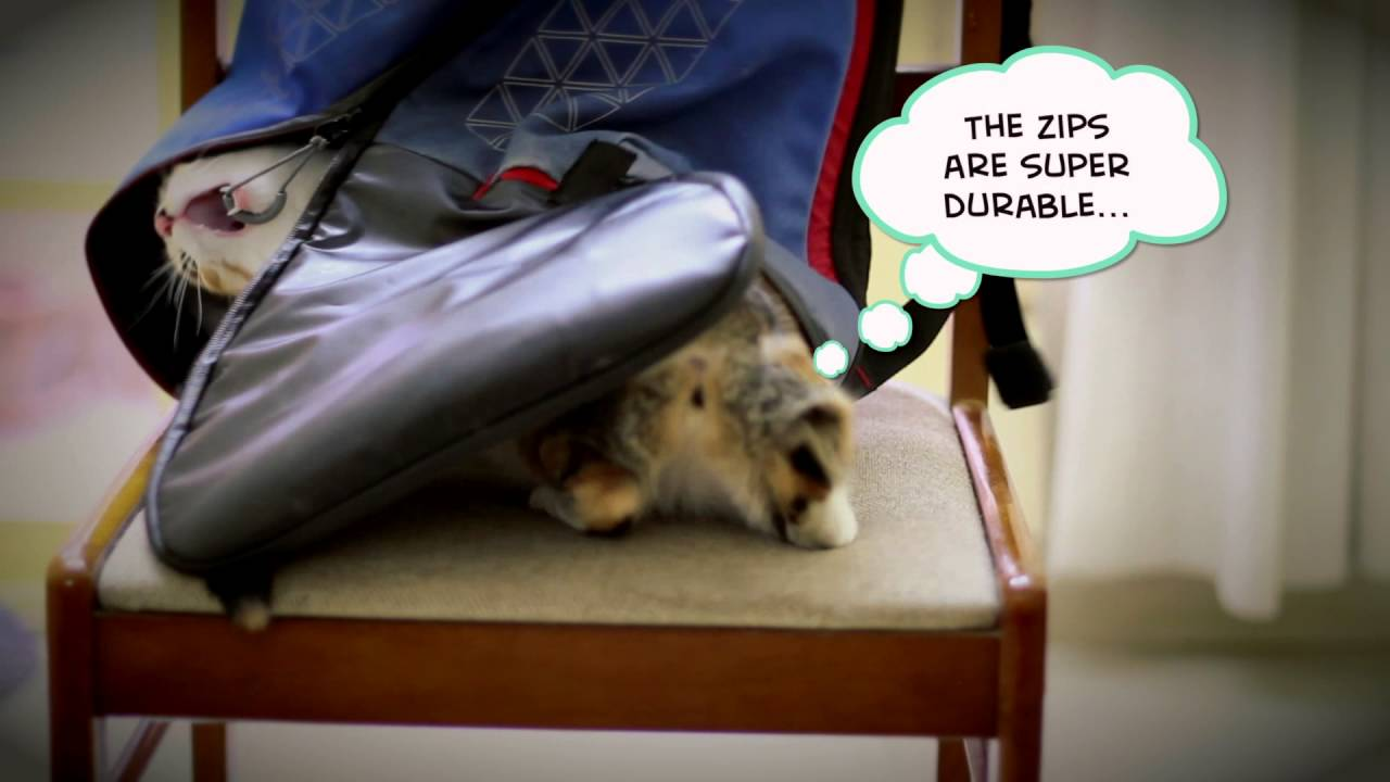 b3303a678 The Cat Review of Lumos Aster - World's safest commute backpack!
