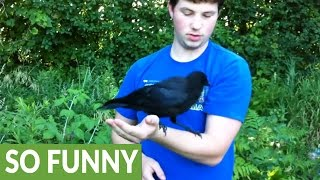 boy-teaches-rescued-baby-crows-how-to-pick-raspberries