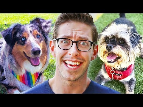 download Keith Puppysits The Try Guys Dogs