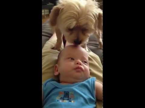 Dog licking baby's head