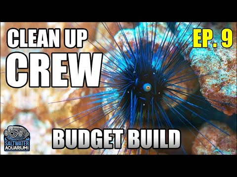 Choosing Your CLEAN-UP CREW - Beginner Saltwater Budget Aquarium