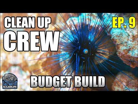 Choosing Your CLEAN-UP CREW - Beginner Saltwater Budget Aquarium