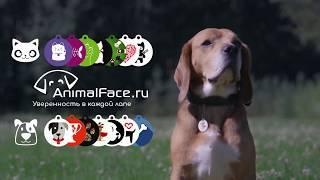Электронный брелок для животных от AF