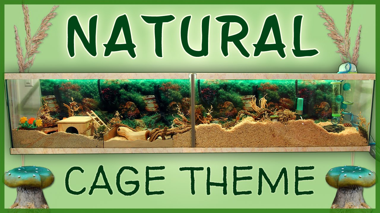 Carob's NATURAL Hamster Cage Theme! - YouTube