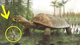 Quanto erano grandi gli Animali 100 Milioni di anni fa?