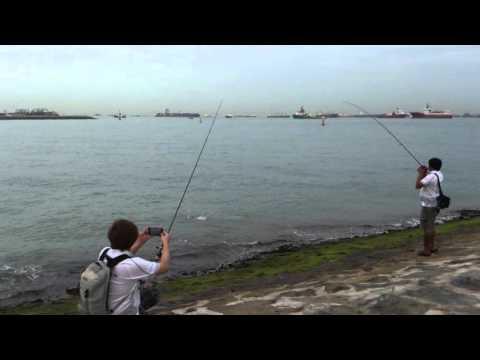 Marina Barrage Fishing