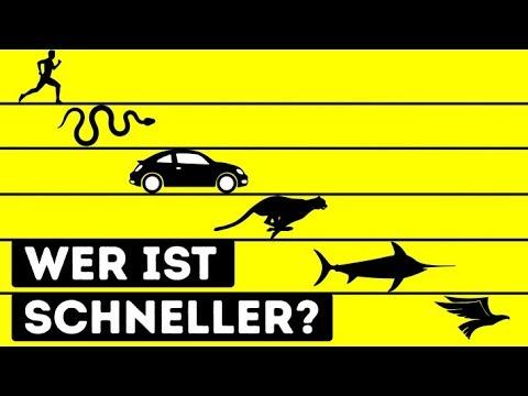 Wer ist das schnellste Lebewesen der Welt?