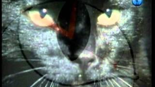 Зрение кошачьих