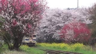 20170409 普通列車 ~ 春の三重奏/宝珠山駅そば その1