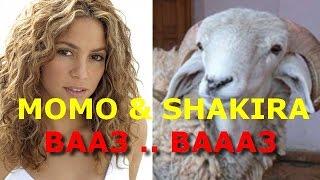 momo shakira ba3 ba3