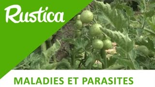Repeat youtube video Des tomates sans maladies