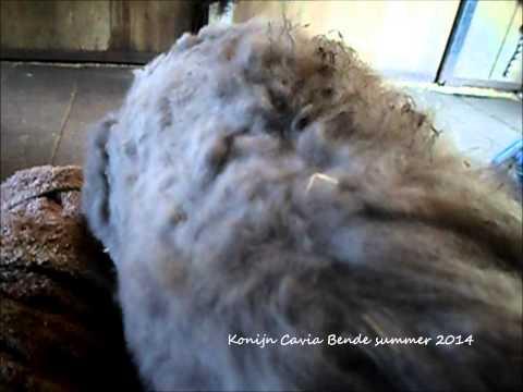 Loulou zwaar verwaarloosd konijn na eerste half uur knipsessie juli 22, 2014