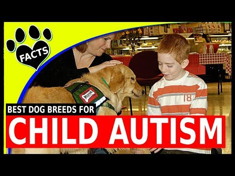 Top 5 Service Dog Breeds for Children with Autism Spectrum Disorder