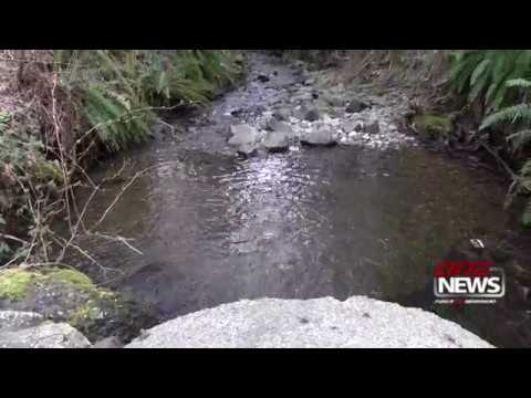 Thurston County Launches Fish-passage Barrier Removal Project